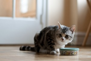 Living with pets, pets, house cleaning tips, cleaning tips, DIY cleaning, pet cleaning tips, getting rid of pet hair.