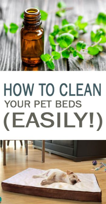 Clean, home with pets, pet hacks, cleaning tricks, popular pin, living with pets, cleaning, cleaning hacks.