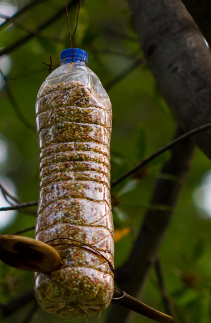 water bottle birdfeeder