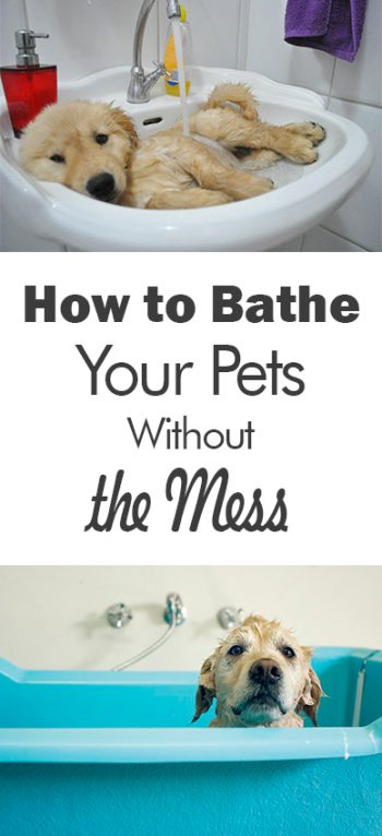 How to Bathe Your Pets Without the Mess - 101 Days of Organization| Bathe Your Pets, How to Bathe Your Pets, Bathing Hacks, Bathing Hacks for the Home, Home Stuff, Pet Hacks #PetHacks