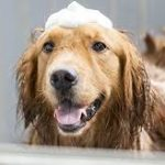 How to Bathe Your Pets Without the Mess - 101 Days of Organization  Bathe Your Pets, How to Bathe Your Pets, Bathing Hacks, Bathing Hacks for the Home, Home Stuff, Pet Hacks #PetHacks