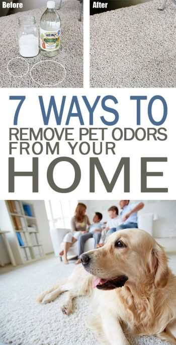 7 Ways to Remove Pet Odors from Your Home - 101 Days of Organization| Pet Odor Elimination, Pet Odor Carpet, Pet Odor Elliminator DIY, Smelly House Remedies, Cleaning Hacks #Cleaning #PetOdorElimination #PetOdorCarpet