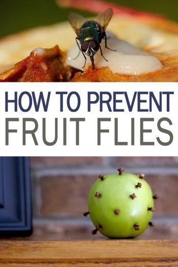 How to Prevent Fruit Flies - 101 Days of Organization | Get Rid of Fruit Flies in the House, Pest Removal, Pest Removal Hacks,  Pest Control Hacks, Easy Pest Control Hacks
