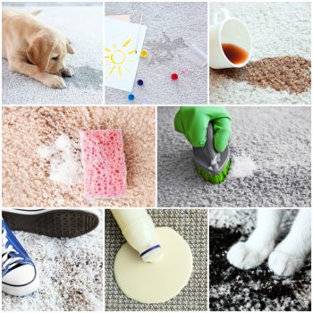Homemade Carpet Cleaner: Say Goodbye to Store-Bought Brands!   DIY Carpet Cleaner   Make Your Own Carpet Cleaner