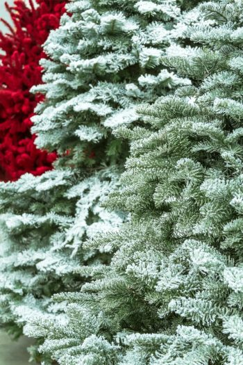 So you want a flocked Christmas tree but don't want to buy one? Easy! Here's how to flock a Christmas tree at home. It's easy to transform your old tree.