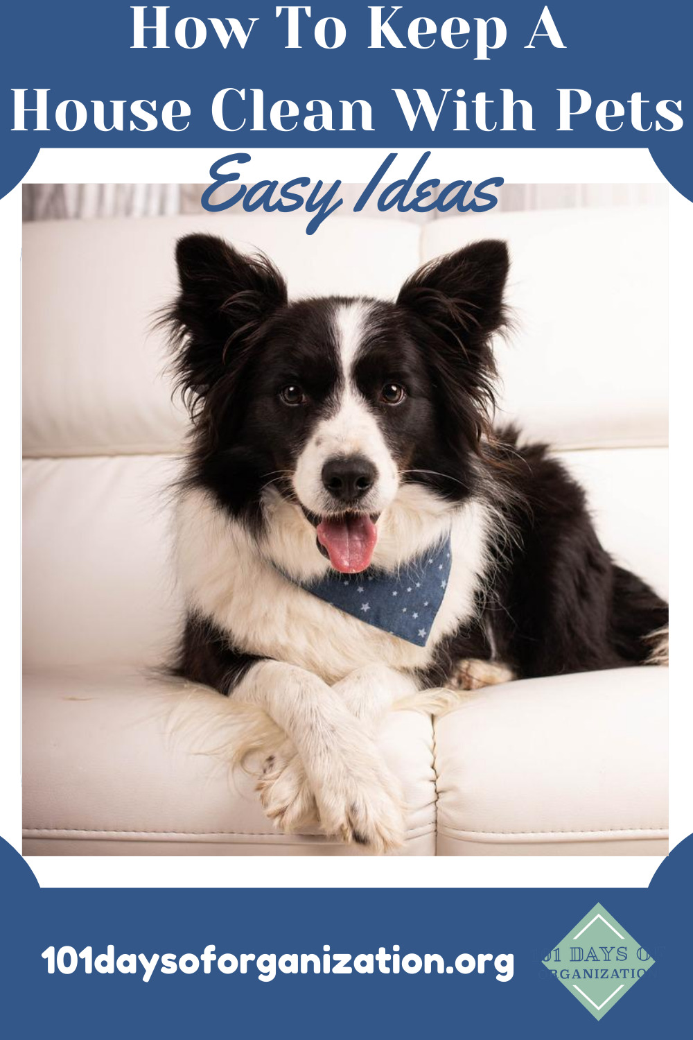 How to keep a house clean with pets! If you have pets, you know that they are notorious for messes that you have to clean up. Stay ahead of the game with these helpful tips and tricks to keep the house clean in spite of your pets! #101daysoforganizationblog #howtokeepahousecleanwithpets