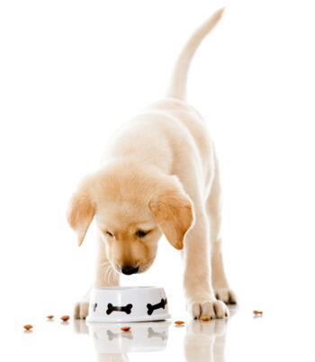 Changing your pet's diet helps in more ways than just keeping your house clean. If your pet seems to shed too much, his diet may need adjusting. Here's how to keep a house clean with pets so you aren't overwhelmed by your new pet's messes.