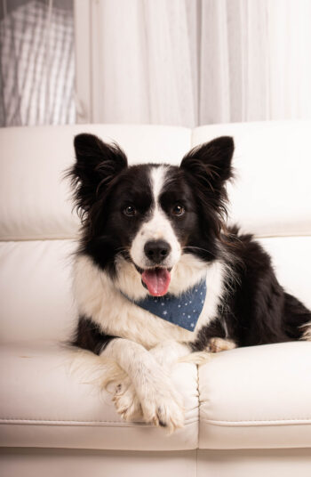 This isn't possible for everyone, but if you move or buy new furniture, consider buying things that are pet-friendly. Here's how to keep a house clean with pets so you aren't overwhelmed by your new pet's messes.