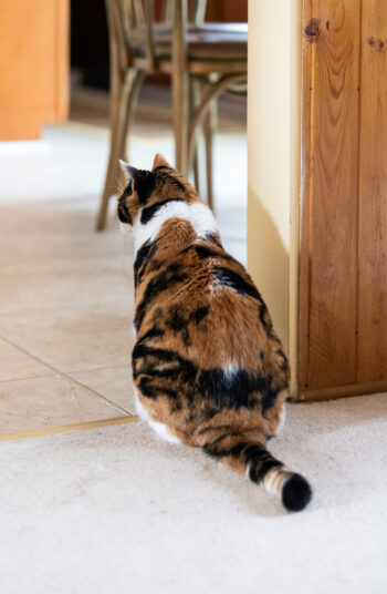 Set boundaries for your pet.  It is possible to train your pet to stay out of certain rooms, so you won't need to worry about pet-proofing every room of your home. Restricting your pet to certain rooms cuts down on the amount of cleaning up after him! Here's how to keep a house clean with pets so you aren't overwhelmed by your new pet's messes.