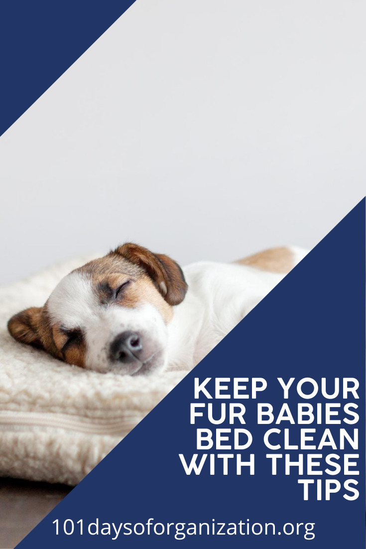 Our fur babies are just like our babies, right? You wouldn't want your baby to sleep in a dirty bed and I know you wouldn't want your fur baby to do that either. So, read this post to learn how to clean your pet's bed with these tips. #pets #lifewithpets #cleaningtips #petcleaningtips #101daysoforganizationblog